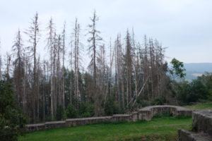 Grünes Band - Tote Bäume