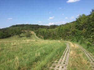 Grünes Band Plattenweg Kolonnenweg
